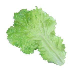 Replica Lettuce Leaf